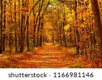 Autumn forest scenery with road ...
