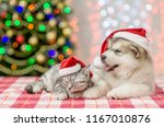 Stock photo sleepy tabby kitten and alaskan malamute puppy in red christmas hats on a background of the 1167010876