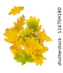autumn oak leaves isolated on... | Shutterstock . vector #116704180
