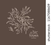 tosaka  laminaria seaweed  sea... | Shutterstock .eps vector #1167088609