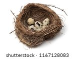 Bird Nest With Eggs On White...