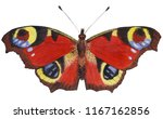 Beautiful Big Butterfly