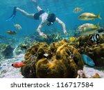 snorkeler underwater looking a... | Shutterstock . vector #116717584