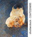 the old metal blue barrel.... | Shutterstock . vector #1167220600