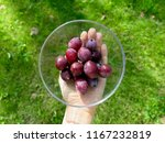 ripe plums in plate on hand.... | Shutterstock . vector #1167232819