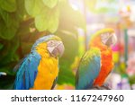 macaw bird with green nature... | Shutterstock . vector #1167247960