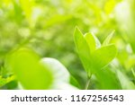 view the freshness of green... | Shutterstock . vector #1167256543