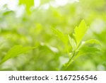view the freshness of green... | Shutterstock . vector #1167256546