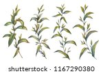 botanical illustration. tea set.... | Shutterstock . vector #1167290380