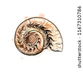 nautilus shell section isolated ... | Shutterstock . vector #1167310786