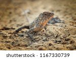 chameleon like godzilla | Shutterstock . vector #1167330739