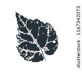vector birch leaf print of... | Shutterstock .eps vector #1167342073