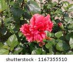 Pink Flower Picture Belongs Nature - Fine Art prints