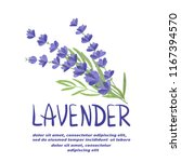 bunch of watercolor lavender... | Shutterstock .eps vector #1167394570
