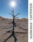 midday sun star in dead vlei in ... | Shutterstock . vector #1167424120