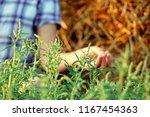 on a background of green grass... | Shutterstock . vector #1167454363
