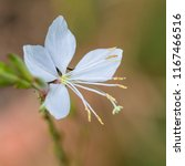 A Macro Shot Of A White Guara...