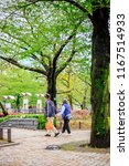 japanese garden  the garden in...   Shutterstock . vector #1167514933
