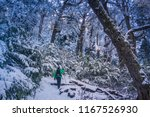 huerquehue national park  pucon ... | Shutterstock . vector #1167526930