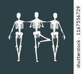 human skeleton standing and... | Shutterstock .eps vector #1167556729
