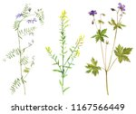 set of isolated watercolor... | Shutterstock . vector #1167566449