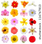 assortment blooming in america | Shutterstock . vector #116767813