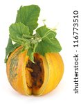 cut pumpkin with green leaves... | Shutterstock . vector #116773510