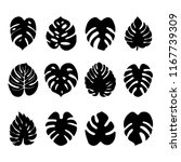 set of exotic tropical leaves... | Shutterstock .eps vector #1167739309