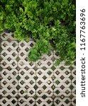 fresh green leaves of fern ... | Shutterstock . vector #1167763696