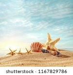 summer photo of shells on beach ... | Shutterstock . vector #1167829786