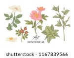sketch floral botany collection.... | Shutterstock .eps vector #1167839566