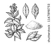 tobacco vector drawing. plant... | Shutterstock .eps vector #1167898753