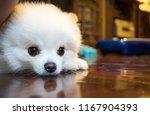 Dog Waiting Owner.white...