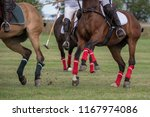 polo    the sport of kings   ... | Shutterstock . vector #1167974086