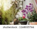main entrance door to a brick... | Shutterstock . vector #1168035766