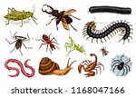 big set of insects. vintage... | Shutterstock .eps vector #1168047166