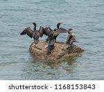 Parker River Wildlife Refuge. A ...
