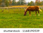 an autumn day  brown horse with ... | Shutterstock . vector #1168190539