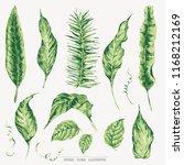 vector set of green tropical...   Shutterstock .eps vector #1168212169