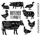 cut of meat  diagram for... | Shutterstock .eps vector #1168242619