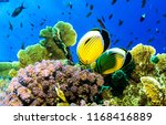 underwater yellow coral fishes... | Shutterstock . vector #1168416889