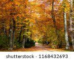 autumn. fall. foliage trees in... | Shutterstock . vector #1168432693