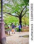 japanese garden  the garden in...   Shutterstock . vector #1168442803