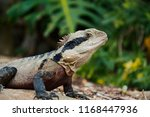 lizard in the jungle | Shutterstock . vector #1168447936