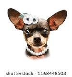 cute chihuahua girl puppy ... | Shutterstock . vector #1168448503