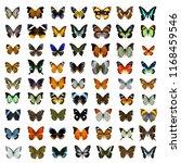 Collection Multiple Thailand Beautiful Butterflies - Fine Art prints