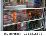 cell culture flask in the... | Shutterstock . vector #1168516576