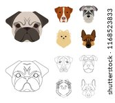 muzzle of different breeds of... | Shutterstock .eps vector #1168523833