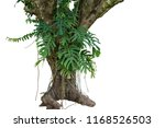 jungle tree trunk with tropical ... | Shutterstock . vector #1168526503
