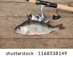 freshwater perch and fishing... | Shutterstock . vector #1168538149